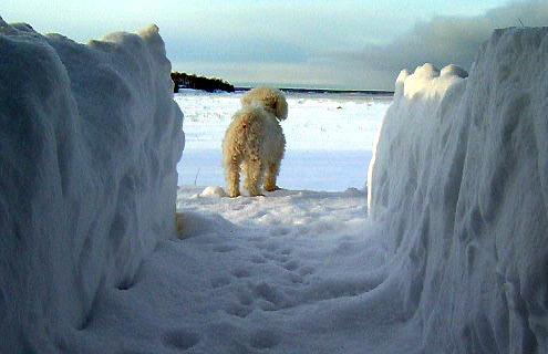 snowy winter scenes