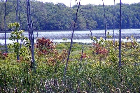 spry lake ontario