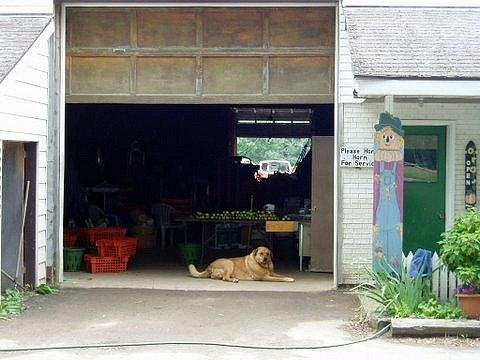 ontario farmers market