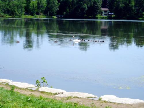 Fairy Lake Ontario